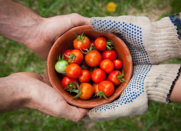 Savez-vous Planter Chez Nous, la fine fleur du jardinage collaboratif